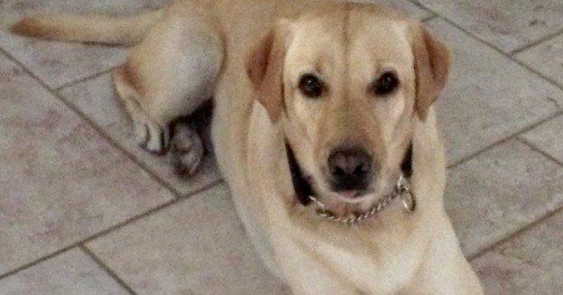 chien avec caméra étanche GoPro