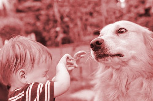 interaction chien enfant