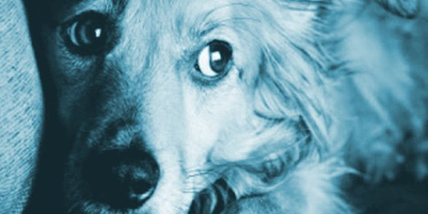peur du feu d'artifice chez le chien