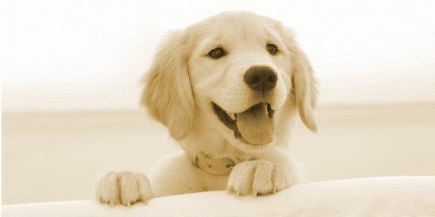 empathie chiot chien