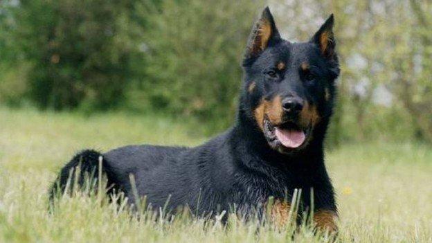 syndrome du grand chien noir