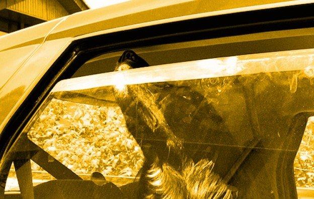 chien dans une voiture surchauffée