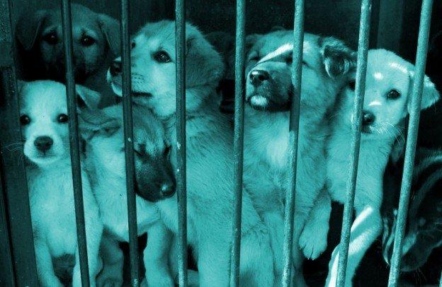 trafic et maltraitance d'animaux, police douane et SPA perquisitionnent
