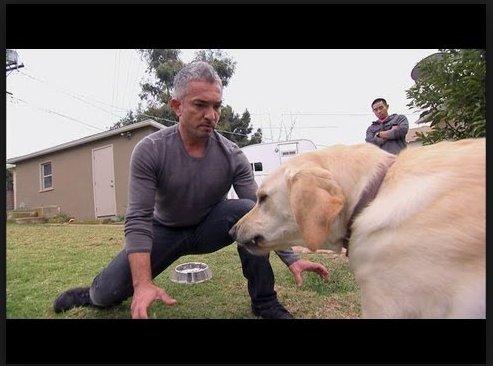 Cesar Millan cerne un chien près de sa gamelle