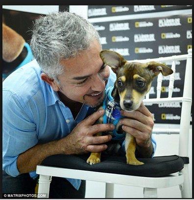 l'éducateur canin Cesar Millan avec un petit chien