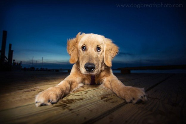 chien de refuge par la photographe Kaylee Greer