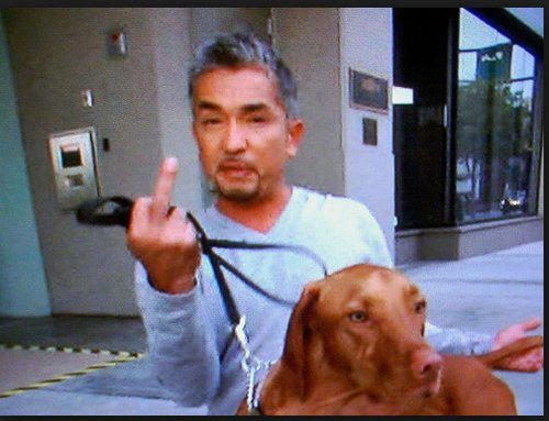 critique scientifique des méthodes de Cesar Millan