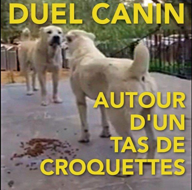 duel canin autour d'un tas de croquettes