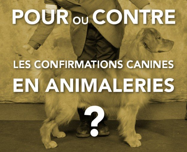examen de confirmation de chiens de race en animalerie