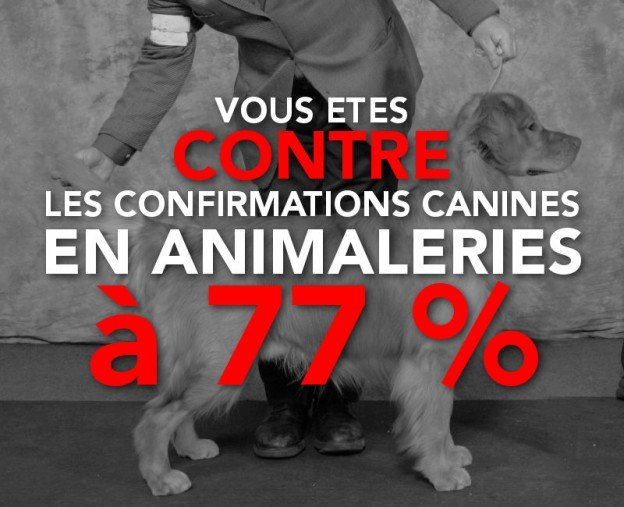 contre les confirmations de chiens de race en animalerie
