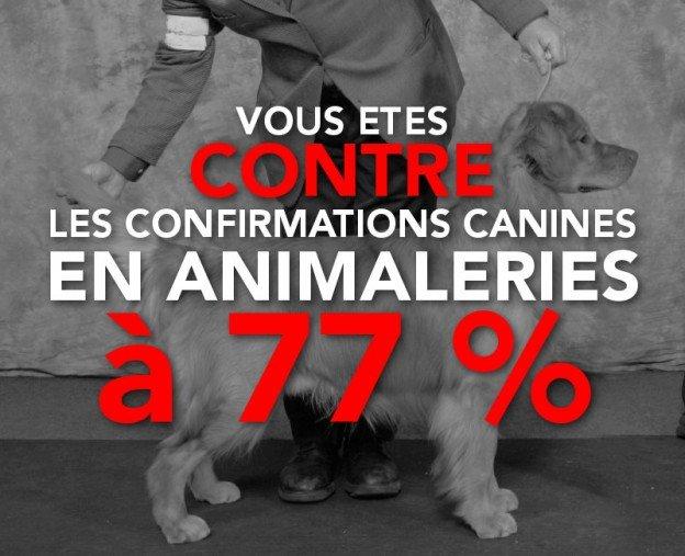 contre les confirmations de chiens de race en animalerie
