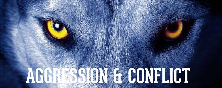 agression et conflit chez le chien