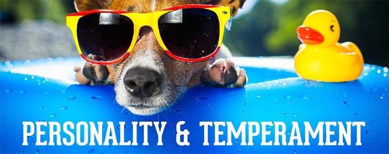 personnalité et tempérament du chien