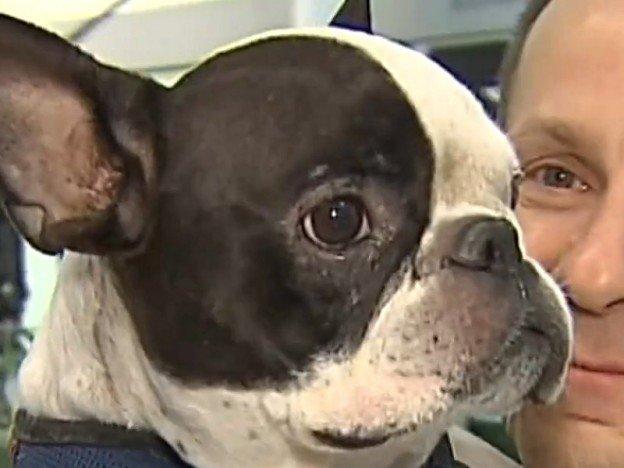 un pilote d'avion sauve un chien bouledogue français d'une mort certaine dans la soute de l'avion