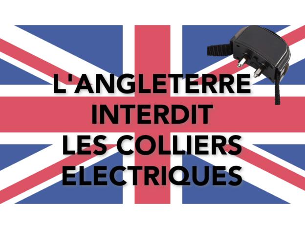L'Angleterre interdit les colliers électriques pour chiens